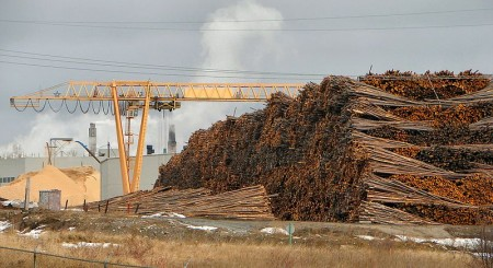 Iroquois Falls woodpile at the mill, Highway 11