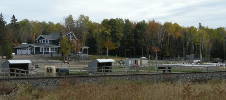 Horse farms and stables, just north of Powassan's downtown drag