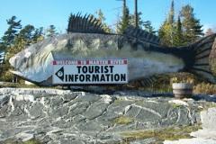 Marten Falls, big fish, Highway 11 Ontario