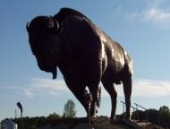 Earlton, Ontario Highway 11 Bison statue